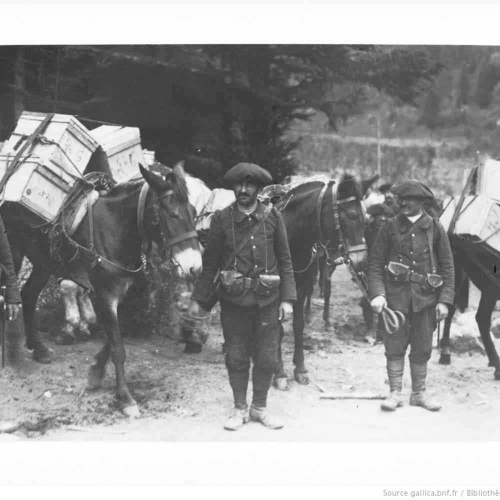 Ravitaillement en munitions dans les Vosges [Chasseurs alpins tenant des mulets chargés de caisses de munitions]